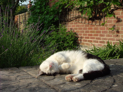 Jake, a tabby and white cat, sleeping on a garden patio