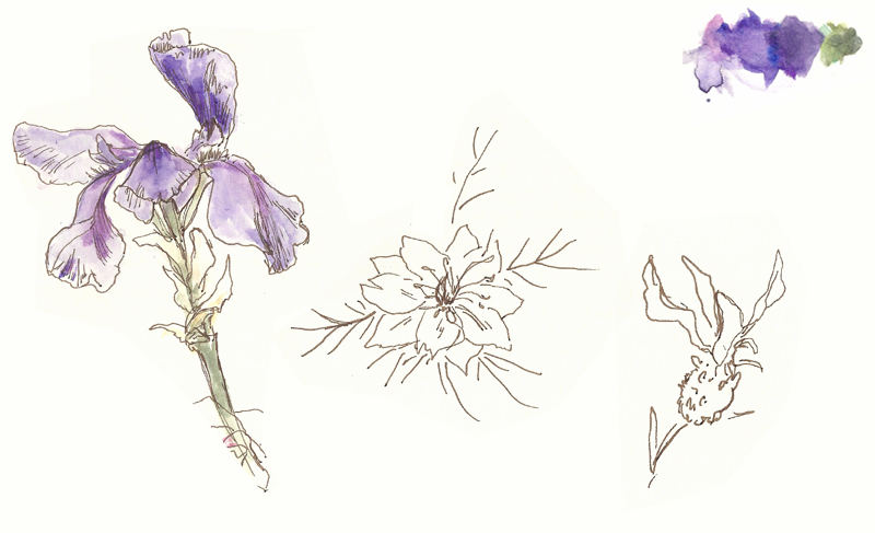 An iris (left); lavender (right); and some other flower-type thing (centre).