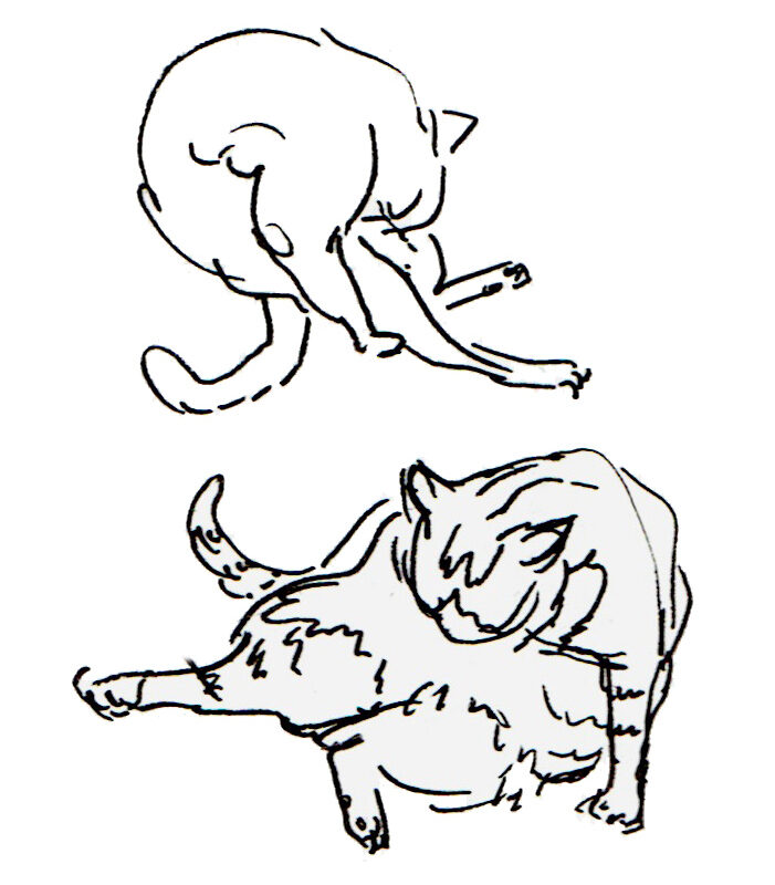 Loose black ink sketches of a large cat, bent over, washing its tummy