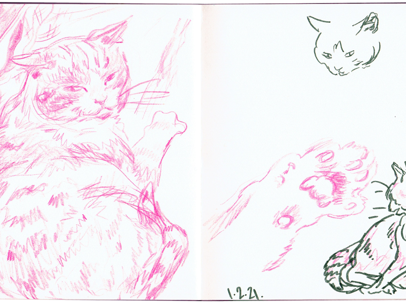 Pink pencil sketch of a fat cat with a sassy face, next to a green ink sketch of the cat turning and washing his side